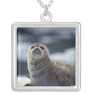 Alaska, southeast region Harbor seal on ice Silver Plated Necklace