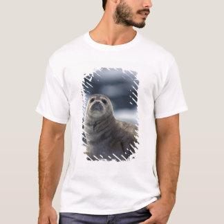 Alaska, southeast region Harbor seal on ice T-Shirt