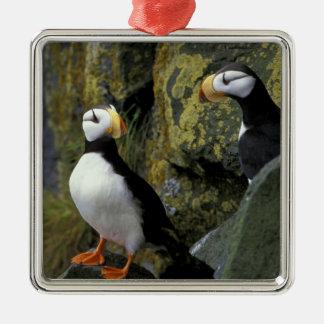 Alaska, St. Paul Island, the Pribilofs, horned Silver-Colored Square Decoration