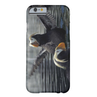 Alaska Tufted puffins Barely There iPhone 6 Case
