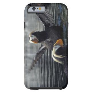 Alaska Tufted puffins Tough iPhone 6 Case