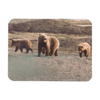 Alaska Tundra Grizzly Sow and Cubs Refrigerator Rectangular Photo Magnet