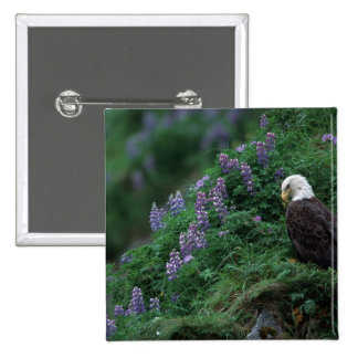 Alaska, Unalaska Island Bald Eagle among Nootka 15 Cm Square Badge