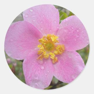Alaska Wild Rose Classic Round Sticker