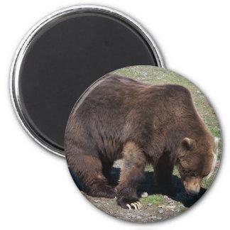 alaskan BEAR Fridge Magnets