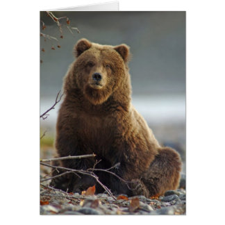 Alaskan Brown Bear at Kenai NWR, Alaska Greeting Card