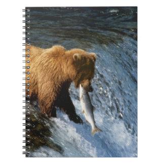 Alaskan Brown Bear Catching Salmon at Brooks Notebook