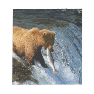 Alaskan Brown Bear Catching Salmon at Brooks Notepad