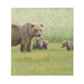 Alaskan Brown Bear Sow and three Cubs, Ursus Notepad