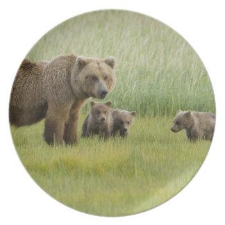Alaskan Brown Bear Sow and three Cubs, Ursus Plate