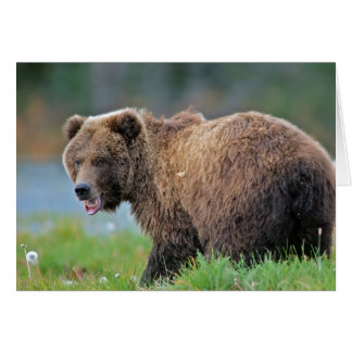 Alaskan Brown Bear with mouth open Greeting Card