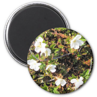 Alaskan Buttercups In Kotz Refrigerator Magnet