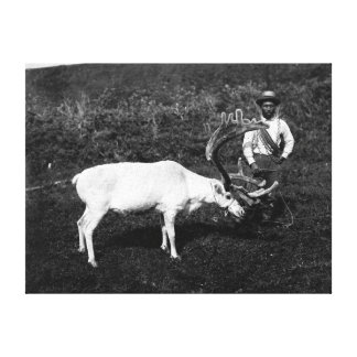 Alaskan Eskimo and Captured Reindeer Canvas Print