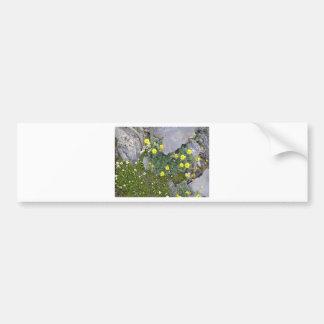 Alaskan Flowers in Denali National Park Car Bumper Sticker