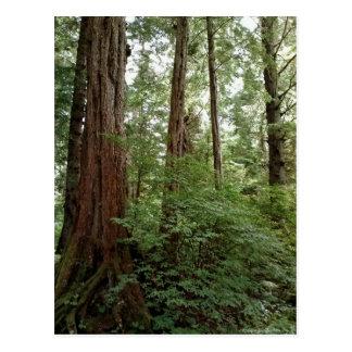 Alaskan Forest Postcard