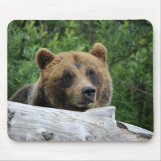 Alaskan Grizzly Bear, The Kodiak Mouse Pad