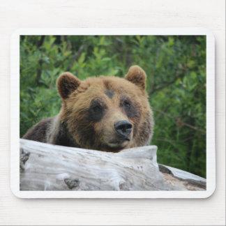 Alaskan Grizzly Bear The Kodiak Mousepads