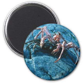 Alaskan King Crab Refrigerator Magnets
