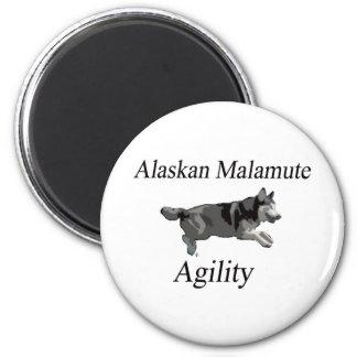 Alaskan Malamute Agility Fridge Magnet