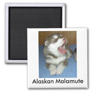 Alaskan Malamute, Alaskan Malamute Square Magnet