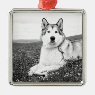 alaskan-malamute bw.png christmas ornament