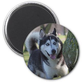 Alaskan Malamute dog fridge magnet, gift idea 6 Cm Round Magnet