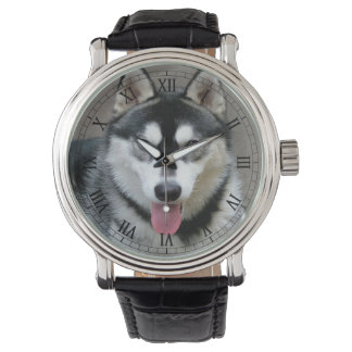 Alaskan Malamute Dog Photograph Wrist Watch