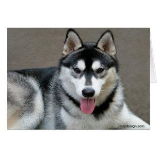 Alaskan Malamute Dogs Card
