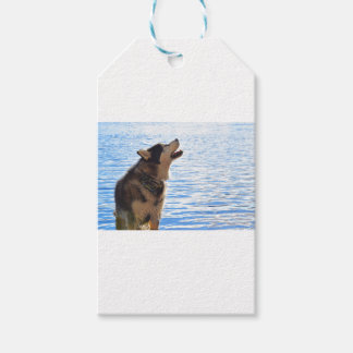 Alaskan Malamute Gift Tags