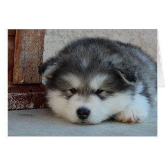 Alaskan Malamute Greeting Card