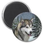 Alaskan Malamute Magnet Magnets