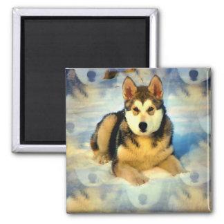 Alaskan Malamute Puppies Square Magnet Fridge Magnet
