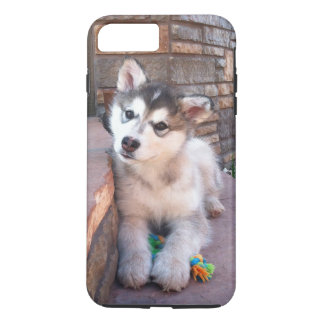 Alaskan Malamute Puppy Head Tilt Photograph iPhone 7 Plus Case