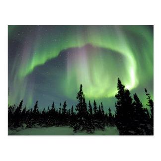 Alaskan Nights Postcard