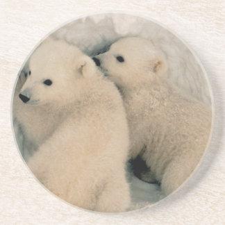Alaskan Polar Bear Cubs Drink Coaster