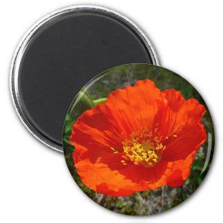 Alaskan Red Poppy Colorful Flower 6 Cm Round Magnet