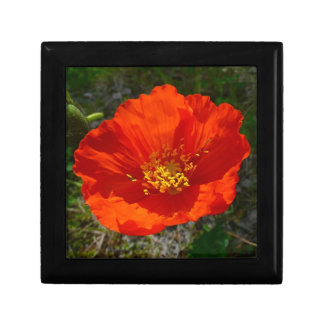 Alaskan Red Poppy Colorful Flower Small Square Gift Box