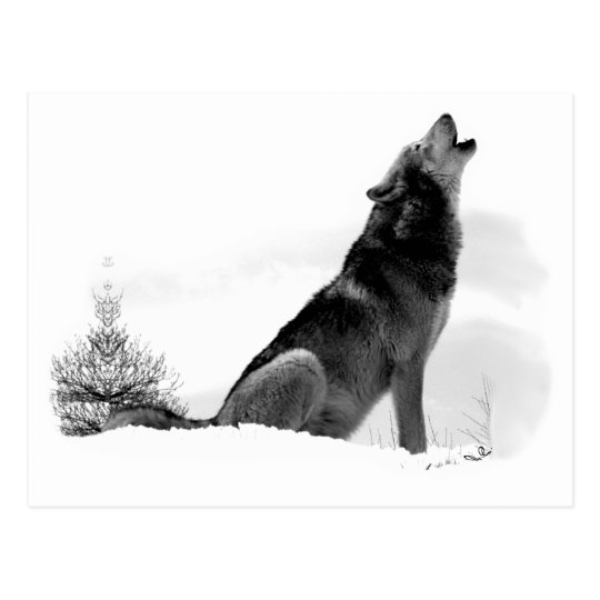 Alaskan Timber Wolf Postcard