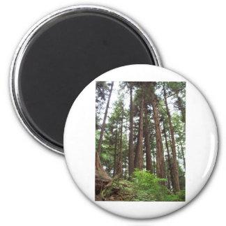 Alaskan Trees Fridge Magnet