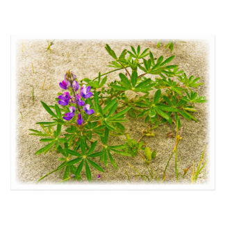 Alaskan Wildflower Postcard