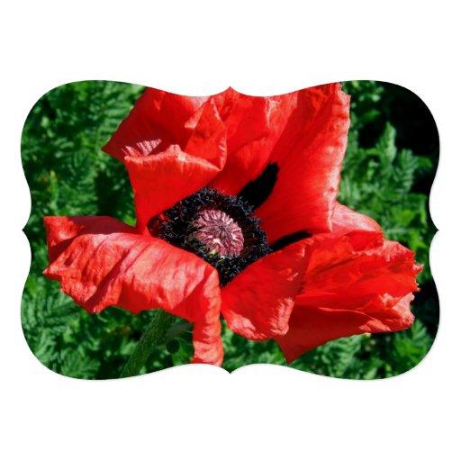 Albanian Red Poppy Custom Invitations