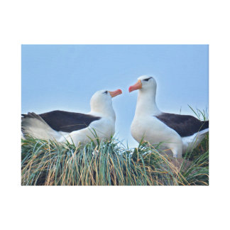 Albatross Couple in Nest Gallery Wrapped Canvas