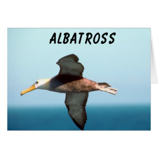 Albatross Flying Card