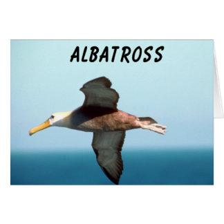 Albatross Flying Greeting Cards