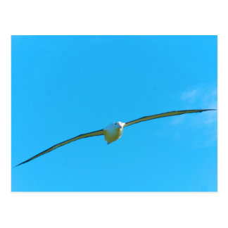 Albatross in the sky postcard