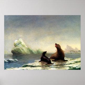 Albert Bierstadt painting, Seals Poster