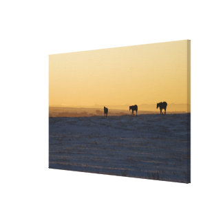Alberta, Canada 3 Canvas Print