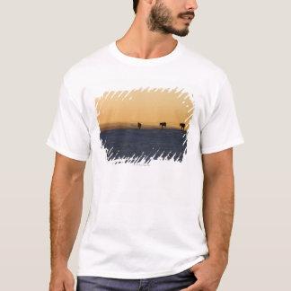 Alberta, Canada 3 T-Shirt