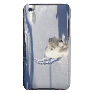 Alberta, Canada iPod Case-Mate Cases