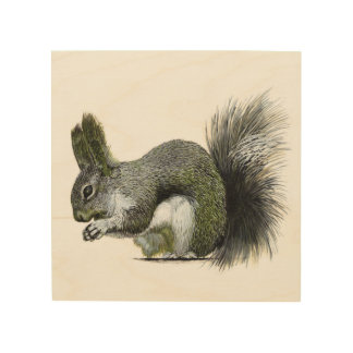 Albert's Squirrel Wood Canvases